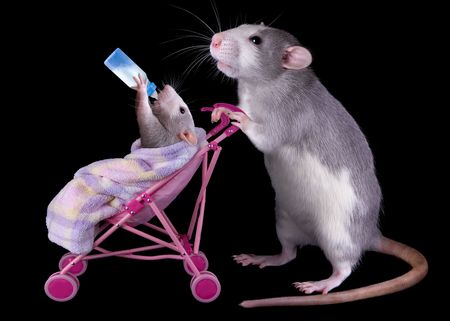 A mother rat is pushing her in a stroller while the is drinking milk from a bottle.