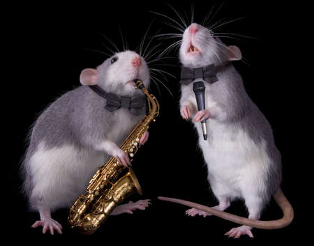 Two rats are performing; one playing the saxophone and one singing. Stock Photo