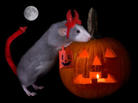 A rat is dressed as a devil for halloween night.