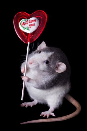 A rat is holding a valentine lollipop that says,