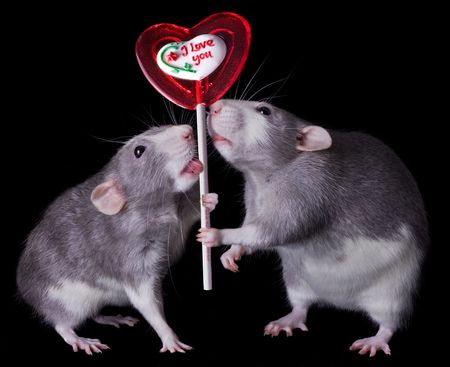Two rats are holding a valentine lolipop that says,  photo