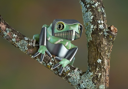 A waxy monkey tree frog is wearing armor while sitting on a branch. photo