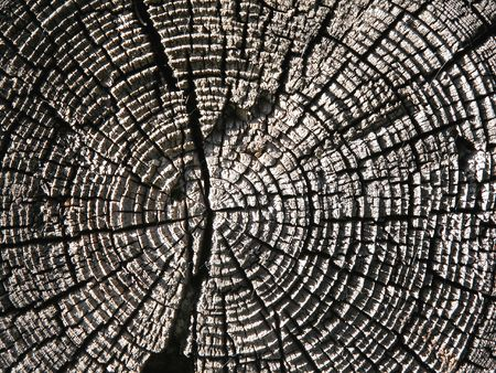 Old wood texture close up Stock Photo
