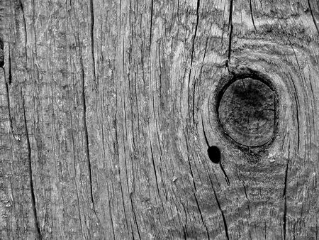 wood cut: Old black and white wood texture close-up
