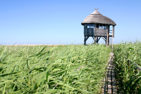 hunter's cabin: Single path to the birdwatching house in Pape Latvia