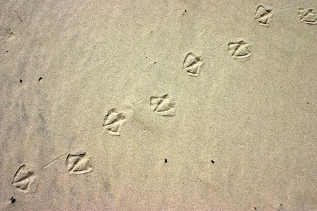 inprint: Deliberately high contrast on the sand with bird paw prints, natural background Stock Photo