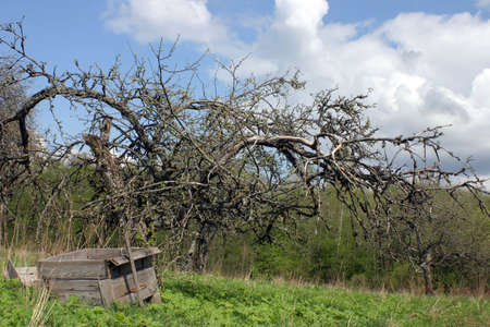 Spooky dead apple tree and ruined hive photo