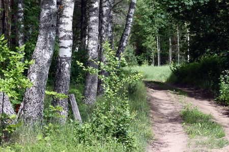 meandering: Remote country road meandering in the forest