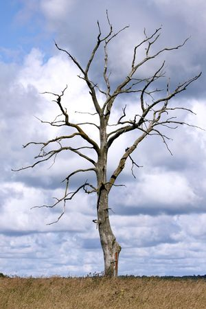 leafless: Dead tree standing alone in natural environment