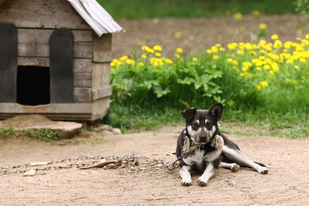 beside: Dog sitting beside kennel in very poor rural environment Stock Photo