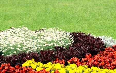 Beautiful flowerbed in public space against green grass background Stock Photo