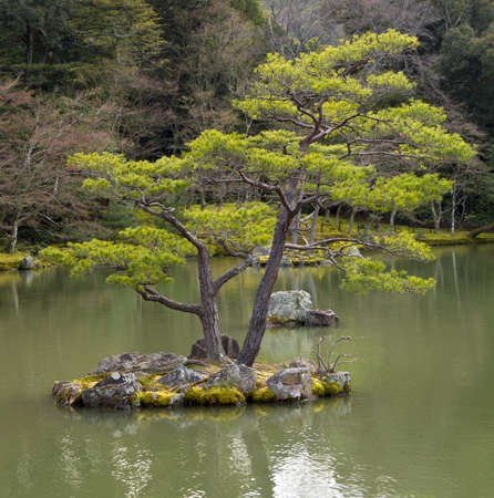garden pond: Small rock island with pine tree at Japanese garden in Kyoto, Japan Stock Photo