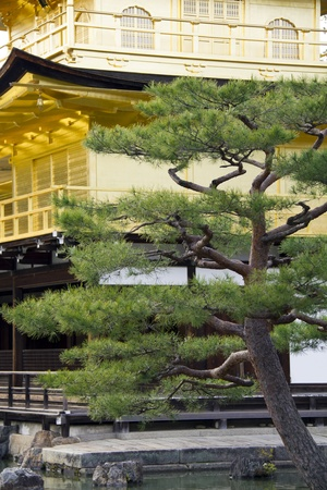 Detail of the peaceful Golden Pavilion or Kinkakuji temple garden in Kyoto, Japan