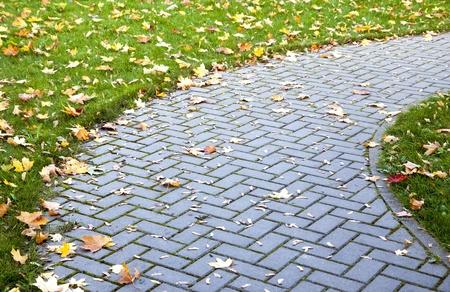 empedrado: Detalle de la hierba verde y el pavimento cubierto de hojas amarillas en otoño Foto de archivo