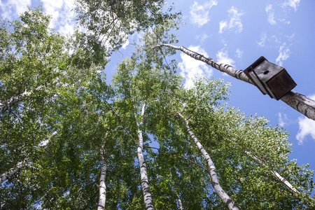 countrylife: Bird house hanging on a birch tree