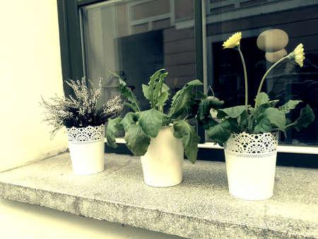 windowsill: Three floeer pots standing on windowsill
