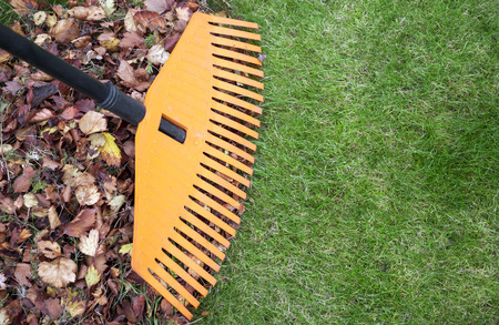 Fall leaves with rake on green lawn. Plenty of copy space