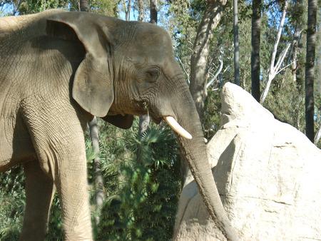savana:           elephant, safari