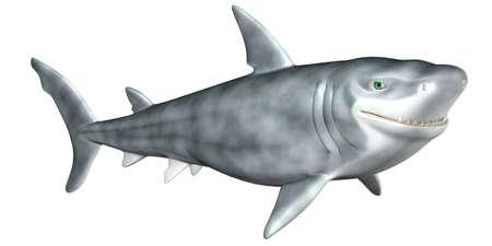 tiburon caricatura: Ilustraci�n de un tibur�n de dibujos animados aislado en un fondo blanco
