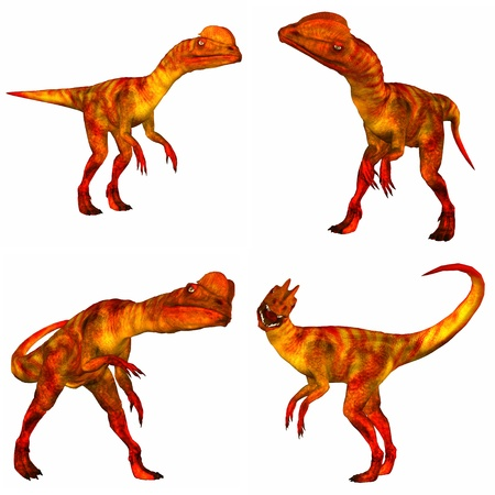four species: Illustration of a pack of four  4  dilophosaurus  species of dinosaur  with different poses isolated on a white background