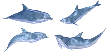 Illustration of a pack of four  4  dolphins with different poses isolated on a white background illustration