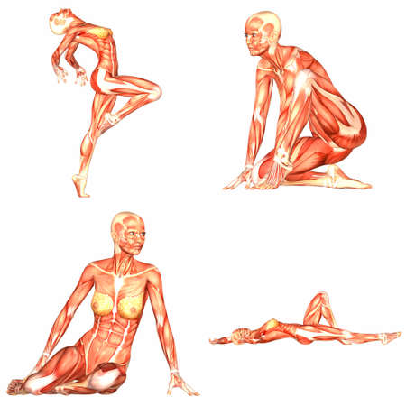 naked woman  white background: Female Human Body Anatomy Pack - 3of5
