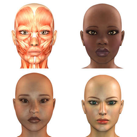 bald girl: Illustration of a pack of four  4  different female faces isolated on a white background