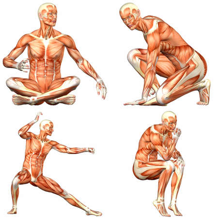 anatomy muscles: Illustration of a pack of four  4  male characters showing the human body anatomy with different poses isolated on a white background - 3of3 Stock Photo