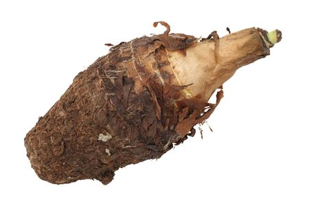A single brown yam root isolated on white