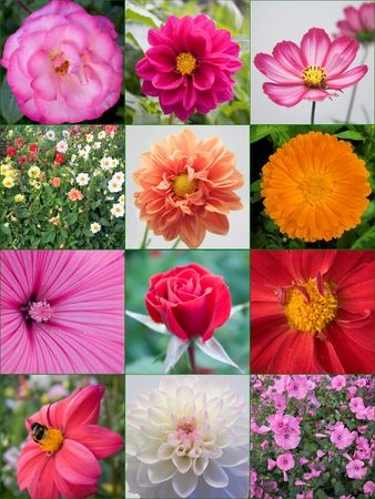 A colorful background of flowers