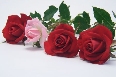 A line of red roses broken by one pink rosebud