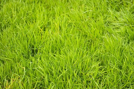 uncut: A background picture of uncut grass Stock Photo