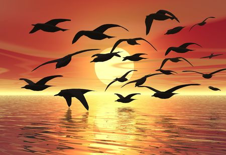 A flock of birds silhouetted against the sunset photo