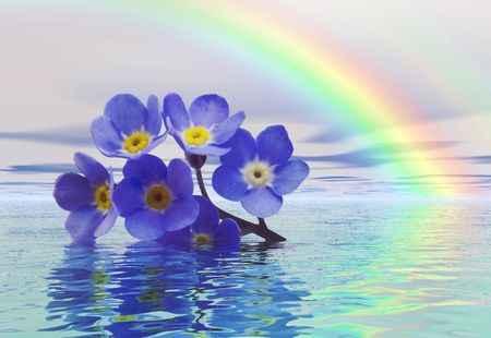 A discarded forget-me-not floats on the water with a rainbow in the background