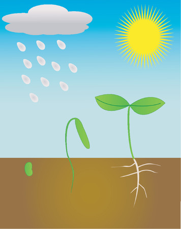 develop: A young plant growing in the sun and rain