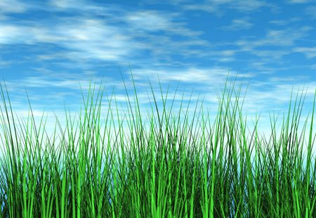 Grass bladed growing towards the sky