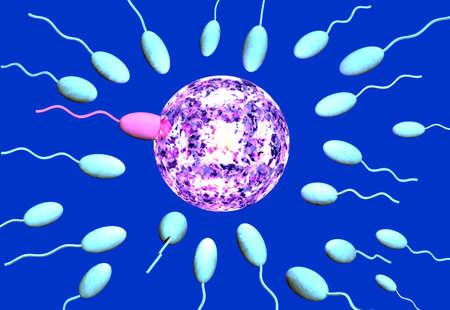 The winning sperm penetrates the egg photo