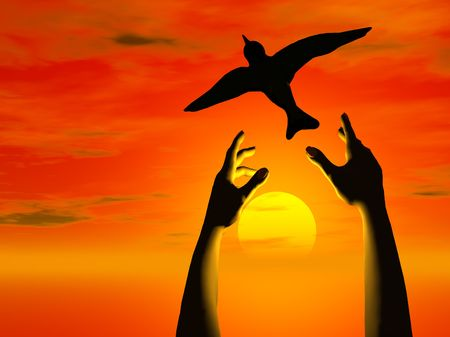 A pair of hands releasing a bird into the sunset