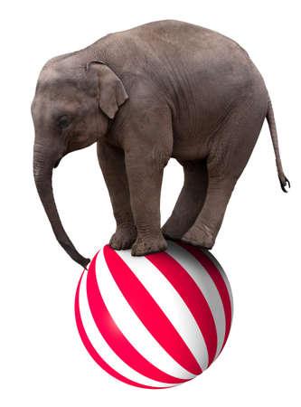 act: A baby circus elephant balancing on a big ball