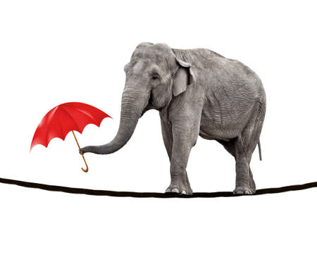 A young circus elephant walking on a tightrope and carrying a red umbrella.