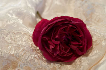 discarded: An old fashioned full blown red rose discarded on satin and old lace Stock Photo