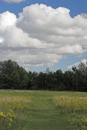 ramble: A path cut through the meadow with trees and clouds in the background