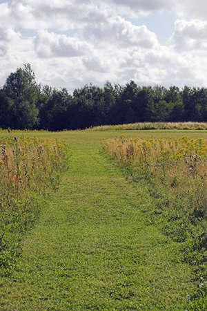 cut through: A path cut through the grassy meadow Stock Photo