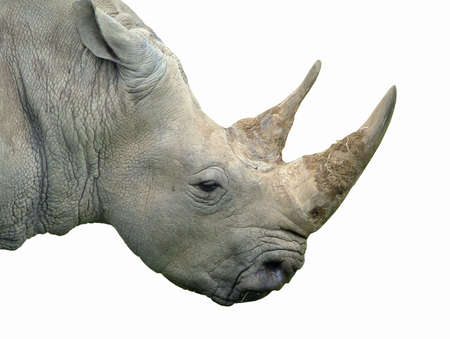 A rhinoceros isolated on white