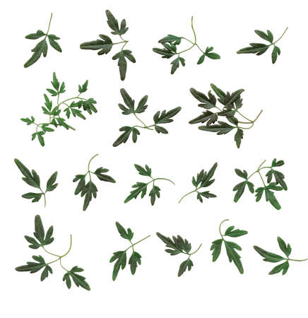 Design elements, small leaves.