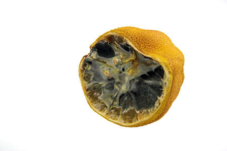 moldy: A lemon going moldy and rotten Stock Photo
