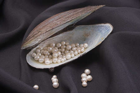 mother of pearl: A shell holding pearls on black silk