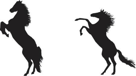 Mighty stallions rearing Illustration
