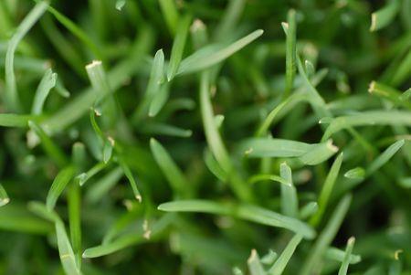 cut grass: cut grass background with shallow depth of field