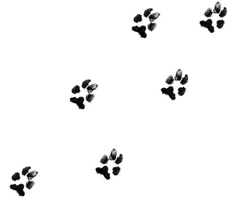 black dog paw prints on white background